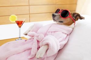 Hoteles de Lujo para perros