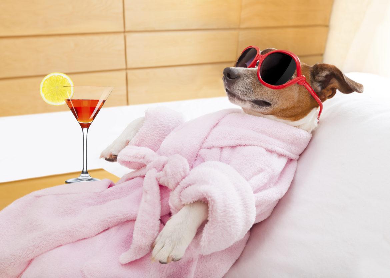 Los 5 Mejores Hoteles de Lujo para perros